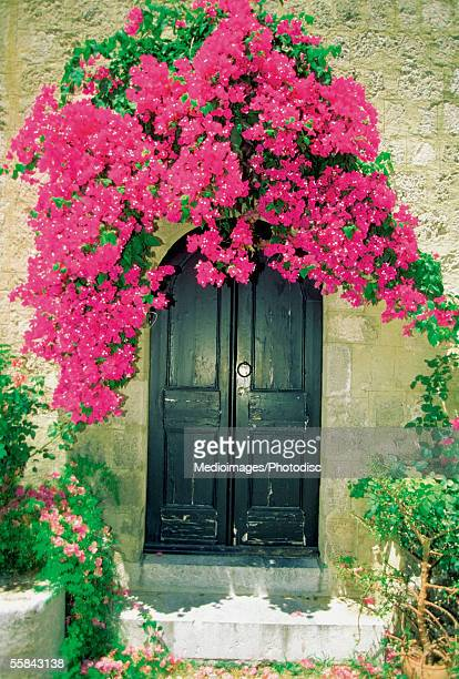 Bougainvillea growing over the doorway of a house, Rhodes, Greece