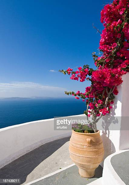 bougainvillea on stairs