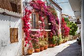Bougainvillea in the streets of Ibiza