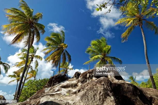 Boulder and palms at The Baths National Park, Virgin Gorda, British Virgin Islands