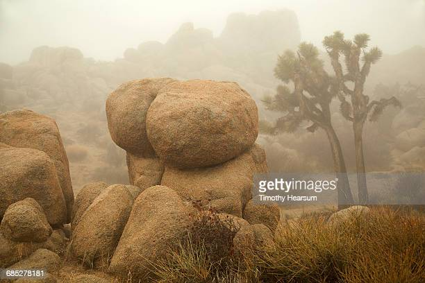 Boulders and Joshua Trees on a foggy day