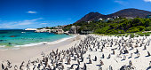 Boulders beach in Simons Town, Cape Town, South Africa. Beautiful penguins.