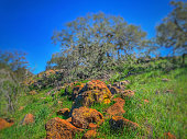 Lichen covered boulders on hill.