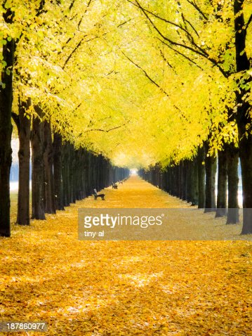 Boulevard in Autumn : Stock Photo