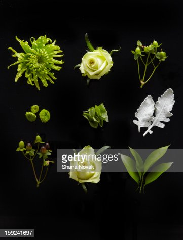 Bouquet, Dissected : Stock Photo