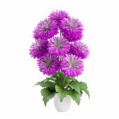 Bouquet of chrysanthemums flowers planted white ceramic pot isolated on white background. 3D Rendering, Illustration.