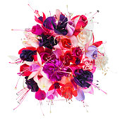 bouquet of colorful fuchsia flowers is isolated on white background, closeup
