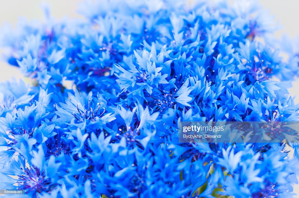 Bouquet of cornflower flowers with bokeh, floral abstract background : Stock Photo