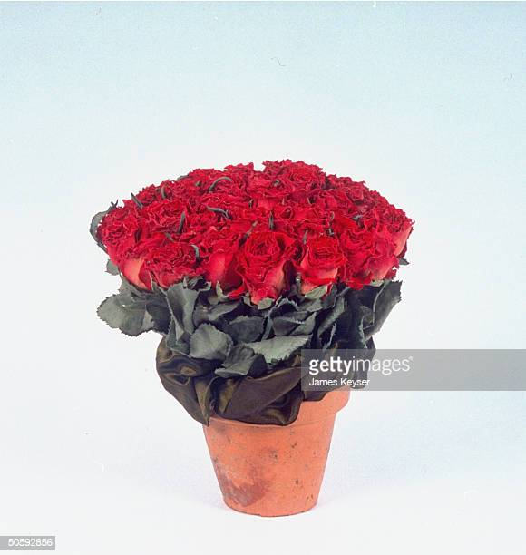 Bouquet of dried roses in clay pot