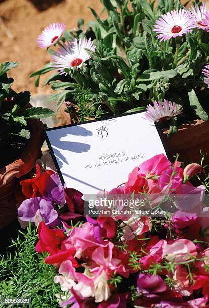 A bouquet of flowers laid by Diana Princess of Wales at the memorial of the Pakistan Airlines air crash in September of the previous year