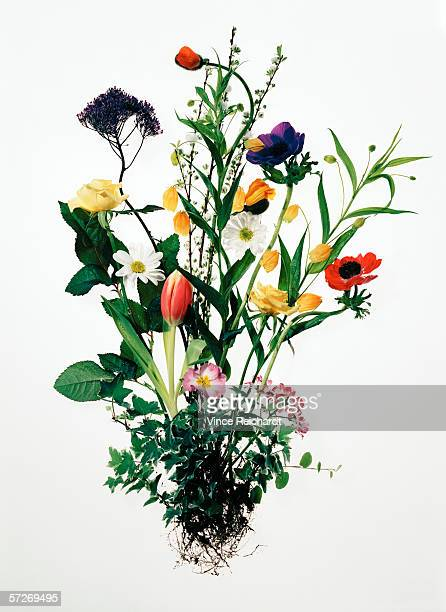 A bouquet of flowers on a white background.
