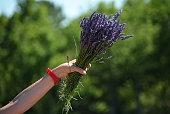 Bouquet of lavenders
