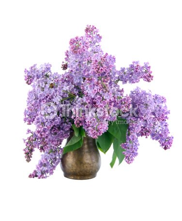 blumenstrau flieder in vase stock foto thinkstock. Black Bedroom Furniture Sets. Home Design Ideas