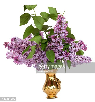 bouquet of lilac : Stock Photo
