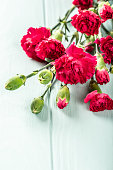 Bouquet of pink carnation on light turquoise wooden background. Greeting card with copy space.