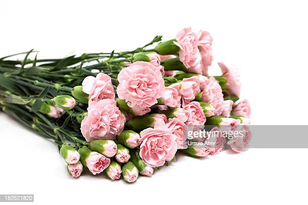 A bouquet of pink carnations