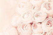 Bouquet of pink peony roses. Shallow DOF - focus on the centre