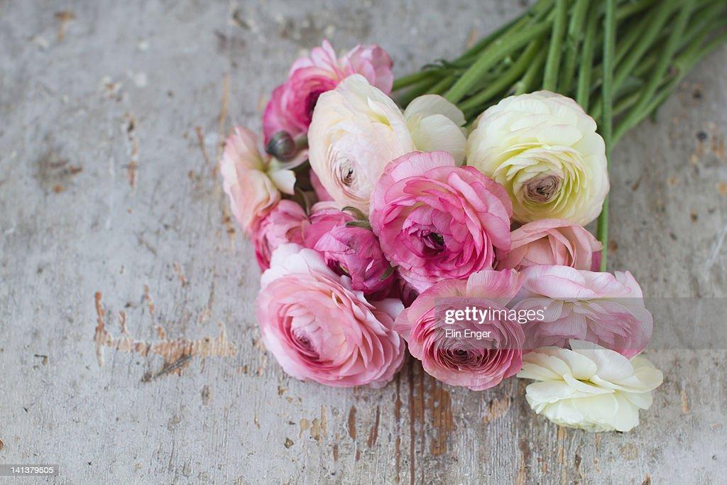 Bouquet of pink ranunculus