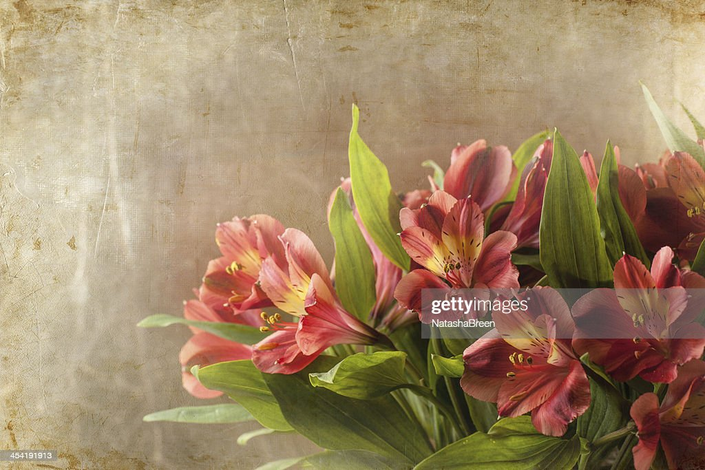 Bouquet of red lily : Stock Photo