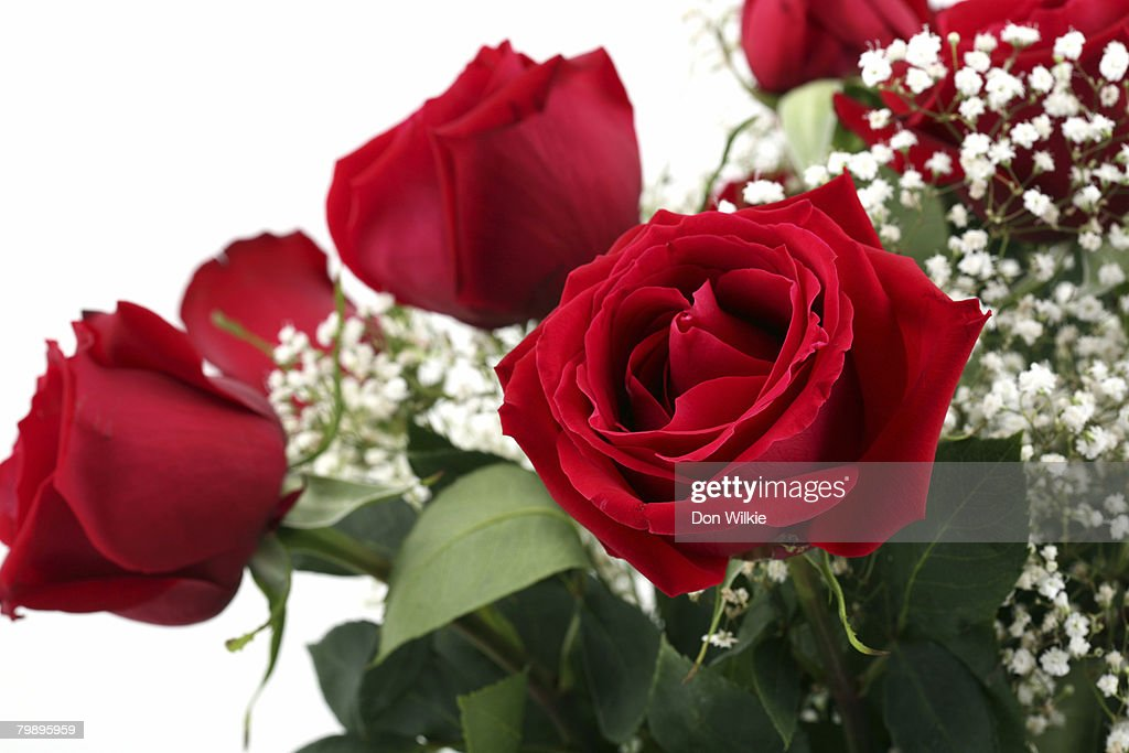 Bouquet of roses. : Stock Photo
