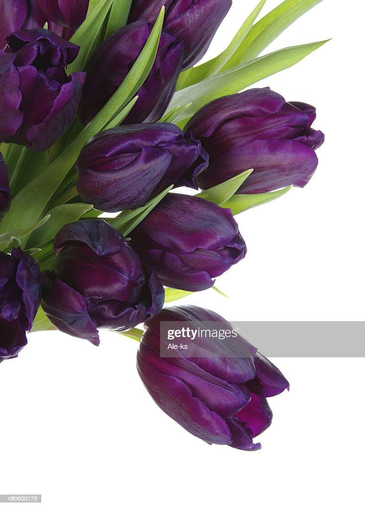 Bouquet of tulips : Stock Photo
