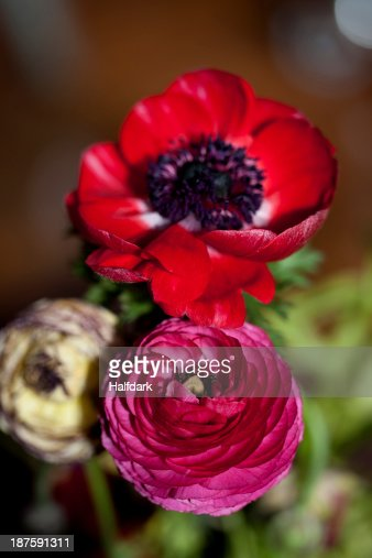 A bouquet of various Ranunculus flowers and a red Anemone flower
