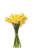 Bouquet of yellow daffodils isolated with leaves on white background