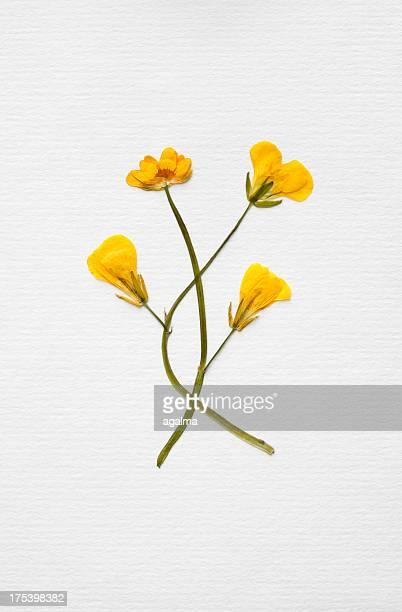 Bouquet formel