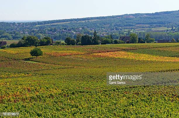 Bourgogne vineyards in autumn