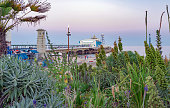 A close up capture of exotic flowers and plants by Bournemouth seafront at early nightfall on a warm summer's evening