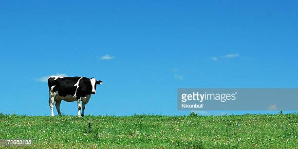Bovine on the Skyline