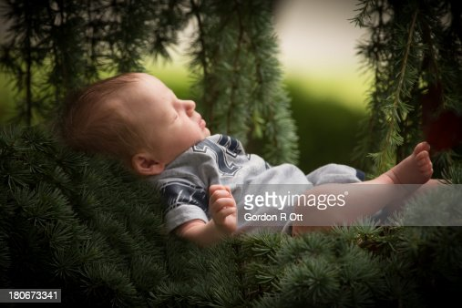 Bower Baby : Stock Photo