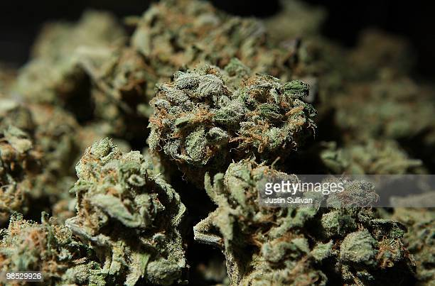 A bowl of medicinal marijuana is displayed in a booth at The International Cannabis and Hemp Expo April 18 2010 at the Cow Palace in Daly City...