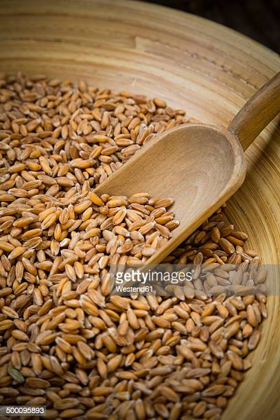 Bowl of spelt grains and wooden shovel, partial view