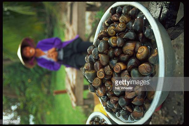 Bowl of Water Snails