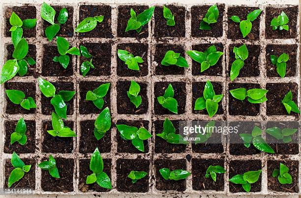 Box filled with plant seedlings