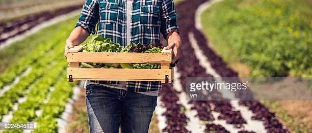 Box of fresh green vegetables