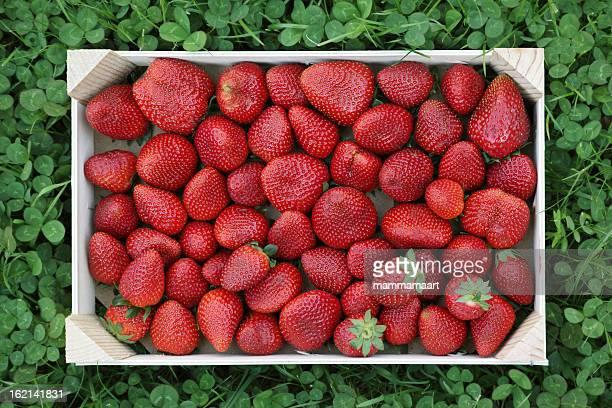 Schachtel mit Erdbeeren in Klee
