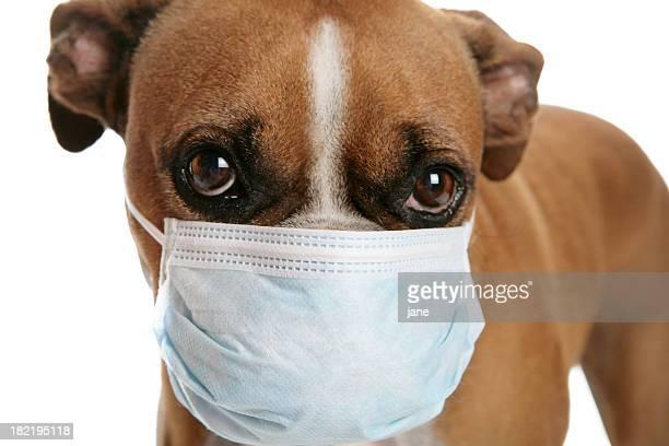 Perro de la gripe
