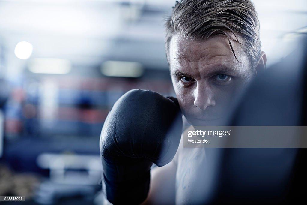 Boxer fighting