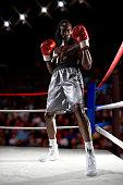 Boxer in stance, portrait