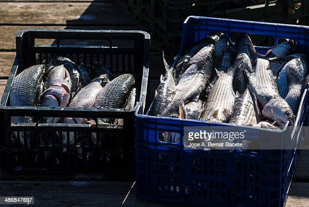 Boxes of fresh and clean fish in the port