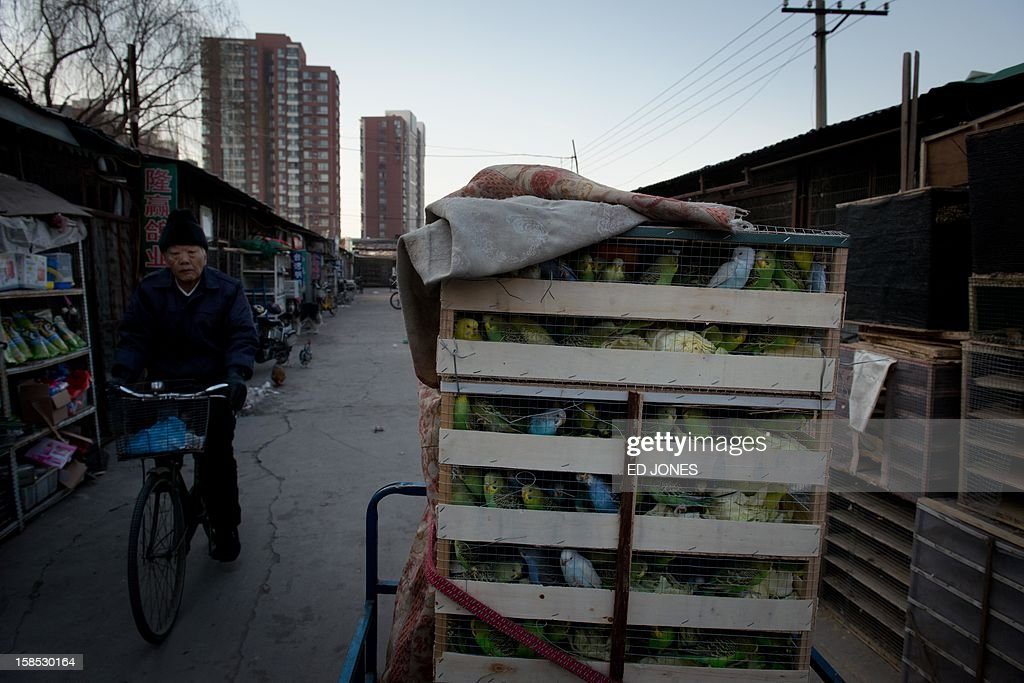 Boxes of parakeets sit on the back of a tricycle at a pigeon market in Beijing on December 18, 2012. The market was once the city's largest until plans were announced to demolish the area to make way for an office development. Vendors, who pay around 0.4 Yuan (0.06 USD) per square metre, according to state media, offer a variety of pigeon-fancying paraphernalia and other animals including rabbits, dogs, and crickets. AFP PHOTO / Ed Jones
