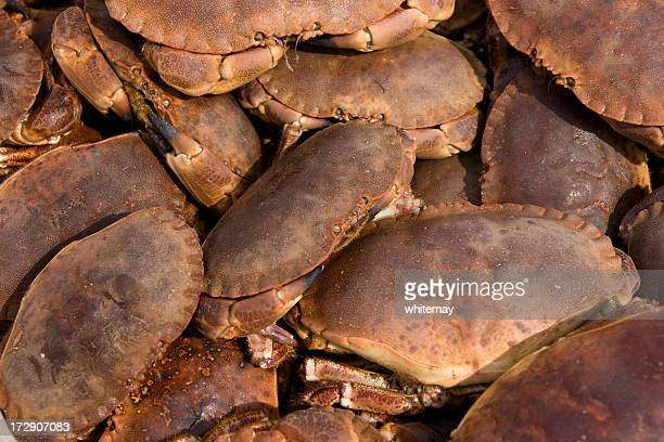 Boxful of Cromer crabs