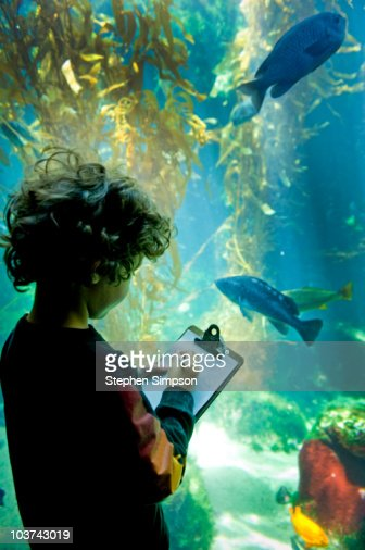 boy [5] taking notes at an aquarium : Stock Photo