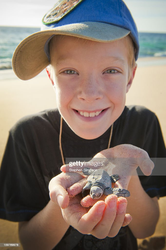 boy about to release Pacific Green Sea Turtles : Stock Photo