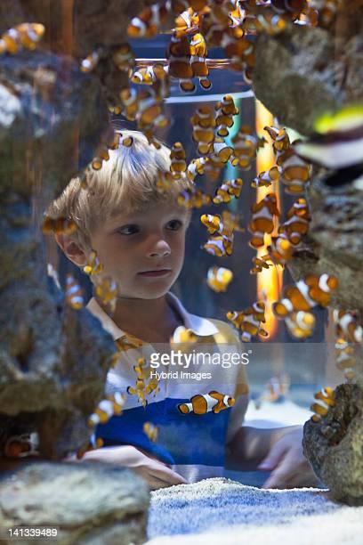 Junge Genießen Sie Fische im aquarium