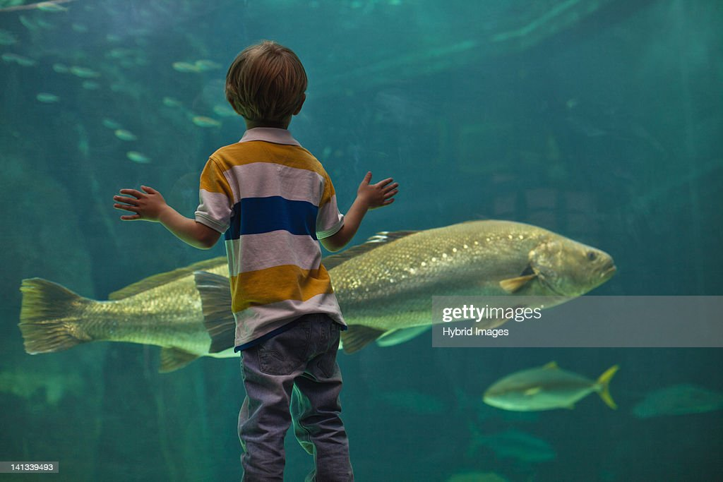 Boy admiring fish in aquarium : Stock Photo