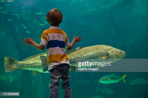Boy admiring fish in aquarium : Stockfoto