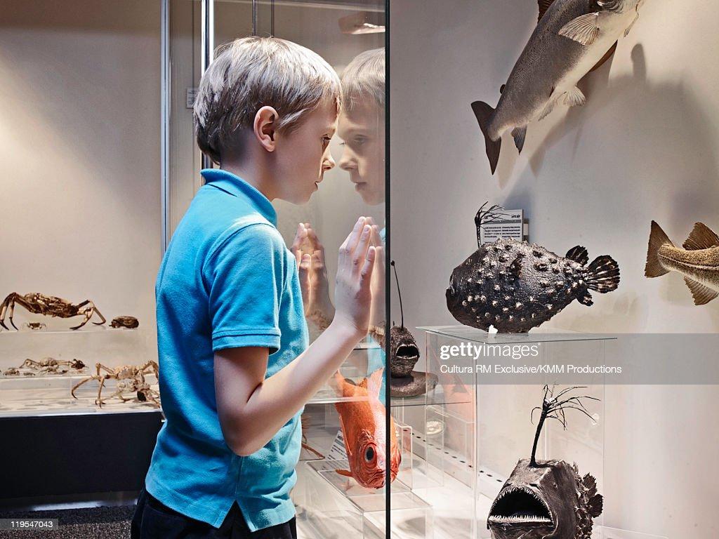 Boy admiring fish models behind glass